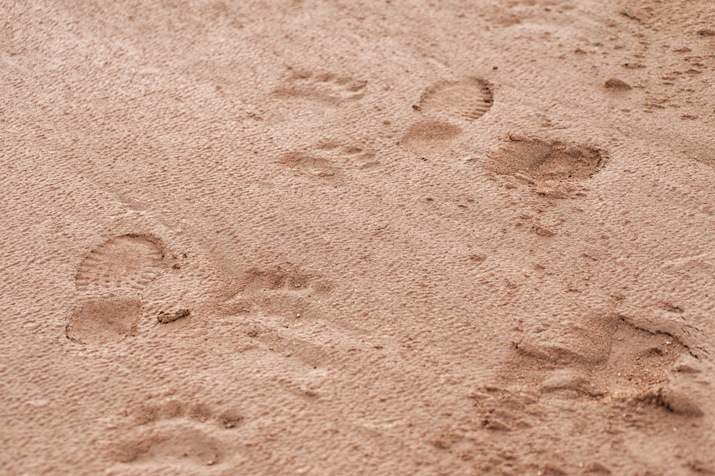 Footprints of Polar Bear, Trekker and Musk Ox in the sand, Jamesond Land, Greenland