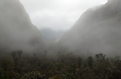 Scott Elliot Pass shrouded in the mist, with afroalpine vegetation, Rwenzori, Uganda