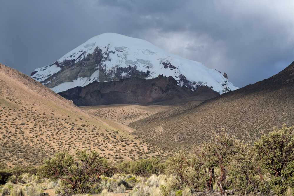 View of forest formed by plants of the genus Polylepis and the extint volcano Sajama in the background
