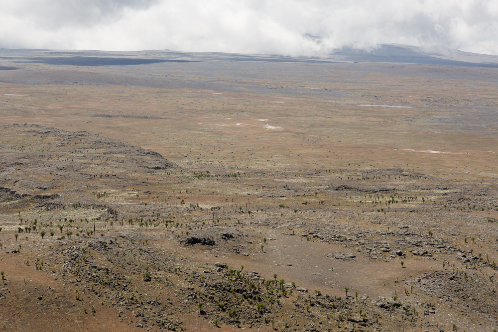 View over the Sanetti Plateau, with giant lobelias scattered in the high altitude steppe, Bale Mountains, Ethiopia