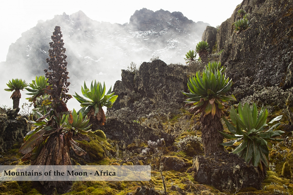 Afroalpine vegetation