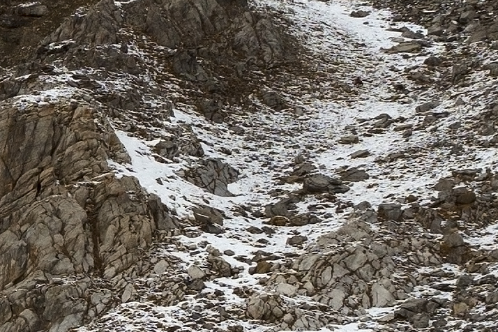 100% view with rocks and two chamois from an image showing a snow storm in the Alps